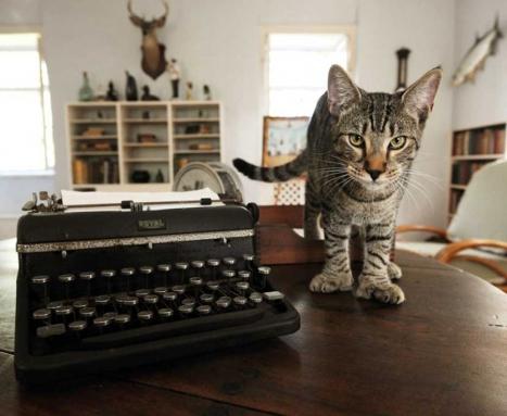 A Six-Toed Hemingway Cat