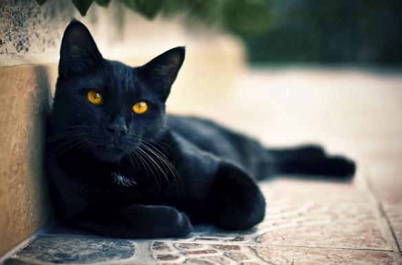 marmelade cat
